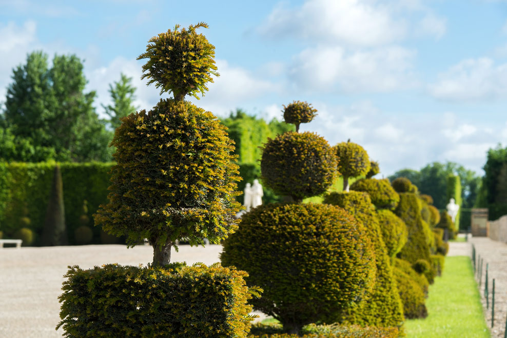 Topiary on the Latona Parterre