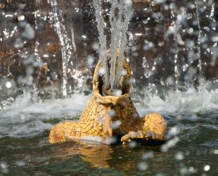 Frog spouting water