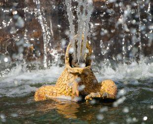 Rana escupiendo agua