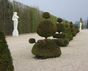 Alignment of the topiary hedges below the Latona parterre