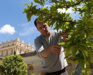 Jardinier à l'Orangerie