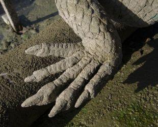 Lizard's paw