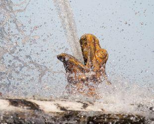泉水の起源にあたる蛙の泉