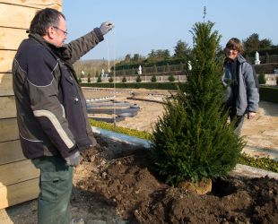 Planting the yews