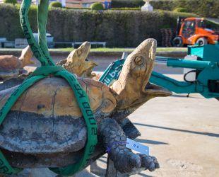 亀の像の撤去