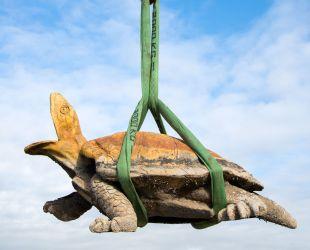 Levantamiento de una tortuga de plomo