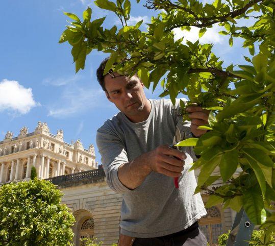 作業中の庭師