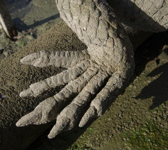 トカゲの足
