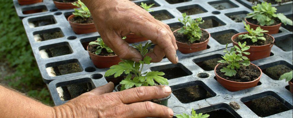 Jardiniers